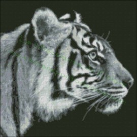 Black and White Tiger