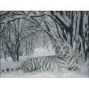 Snowy tiger