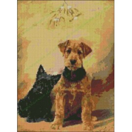 Dogs Airedale Terrier and Scottish Terrier